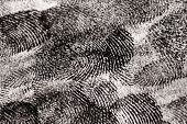 picture of dna fingerprinting  - Black Fingerprints Close up with Abstract Texture - JPG