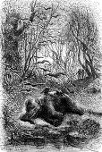 picture of encounter  - Encounter an elephant eats by vultures vintage engraved illustration - JPG