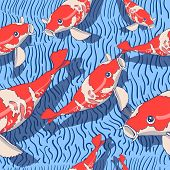 foto of koi fish  - Cute koi fishes on the blue background - JPG