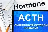 stock photo of hormone  - Papers with hormones list and tablet  with words adrenocorticotropic hormone  - JPG