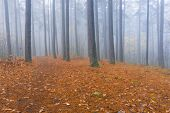 stock photo of spooky  - Foggy spooky forest landscape - JPG