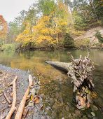 picture of beaver  - Beautiful wild river photographed in autumn - JPG