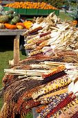pic of wagon  - Dried indian corn sits on a wagon in autumn - JPG