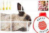 stock photo of taxidermy  - happy easter graphic against four easter eggs hanging from a line - JPG