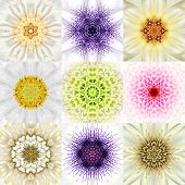 stock photo of kaleidoscope  - Collection of Nine White Concentric Flower Mandalas - JPG