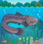 stock photo of freshwater fish  - Freshwater fish topic image 2  - JPG
