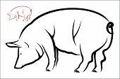 stock photo of pig  - Vector illustration  - JPG