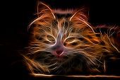pic of glow  - Electric effect Glowing Cat - JPG