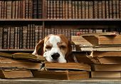 Dog In Library poster
