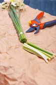 image of daffodils  - Daffodils with pruner on paper close up - JPG