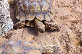 foto of zoo  - Big turtle in zoo  - JPG