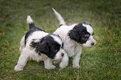 foto of cute puppy  - A pair of 2 - JPG
