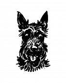 stock photo of scottie dog  - Scottie Dog  - JPG