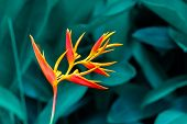 Tropical Leaves Colorful Flower On Dark Tropical Foliage Nature Background Dark Green Foliage Nature poster