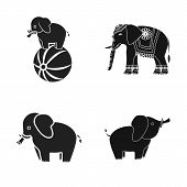 Vector Illustration Of Elephant And Asian Logo. Set Of Elephant And Elephant Stock Vector Illustrati poster