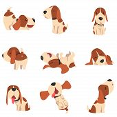 Cute Beagle Dog In Various Poses Set, Funny Animal Cartoon Character Vector Illustration On A White  poster
