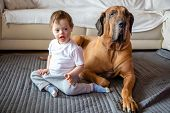 Cute Small Boy With Down Syndrome Playing At Home With Big Dog Of Fila Brasileiro Breed poster