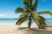 Travel Vacation Tropical Landscape. Palm Tree Beach Landscape. Ocean Nature In Tropical Landscape. T poster