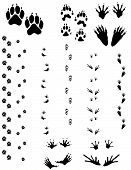 picture of wolverine  - Paw prints and tracks of five different animals. Top Row Left to right: Dog Wolverine Raccoon. Bottom Row: Opossum Frog.