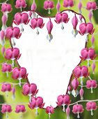 picture of lyre-flower  - An arrangement of Heart shaped Dicentra Spectabilis flowers - JPG