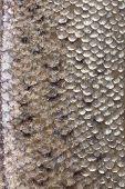 stock photo of fish skin  - Fresh fish skin texture detail background - JPG