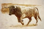 pic of bullfighting  - Pencil drawing on a linen of a brave bull to the gallop in a bullfight - JPG