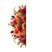 stock photo of english rose  - Vector background with red and orange roses and freesia flowers and green leaves - JPG