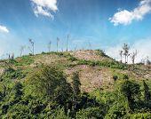 foto of deforestation  - Deforestation nature background - JPG