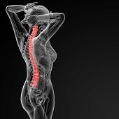 picture of spinal disks  - 3d rendered illustration of the female Vertebral column  - JPG