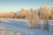 stock photo of siberia  - Nature of Western Siberia winter frost sketches mine 35 degrees Celsius. ** Note: Soft Focus at 100%, best at smaller sizes - JPG