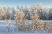 foto of siberia  - Nature of Western Siberia winter frost sketches mine 35 degrees Celsius. ** Note: Soft Focus at 100%, best at smaller sizes - JPG