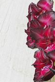pic of gladiolus  - beautiful maroon gladiolus on a wooden background - JPG