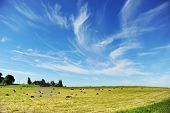 picture of hay bale  - Harvesting hay - JPG
