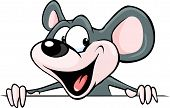 foto of peeking  - funny mouse peeking from behind a white surface  - JPG