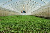 image of greenhouse  - Organic greenhouse - JPG