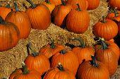picture of hay bale  - Autumn harvest of pumpkins arranged on hay bales - JPG