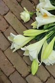 image of sympathy  - white tiger lilies in a sympathy arrangement - JPG