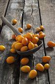 foto of kumquat  - freshly picked kumquats on a wooden spoon - JPG