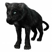 picture of panther  - 3D digital render of a black panther isolated on white background - JPG
