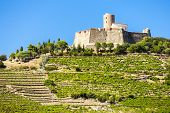 stock photo of elm  - Saint Elme fortress - JPG