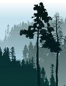 picture of coniferous forest  - Retro - JPG