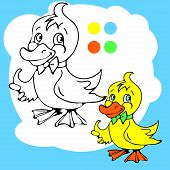 pic of baby goose  - Coloring Book or Page Cartoon Illustration of Funny Goose for Children - JPG