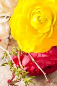 picture of buttercup  - Yellow Persian buttercup in fresh blossom closeup shot - JPG