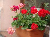 foto of reception-area  - Many plenty of colorful flowers in beds in rural areas - JPG
