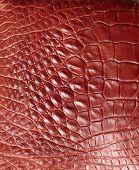 foto of alligator  - Alligator patterned background - JPG