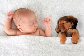 stock photo of little puppy  - Newborn baby and a dachshund puppy sleeping together - JPG