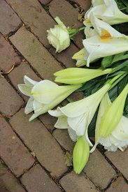 picture of sympathy  - white tiger lilies in a sympathy arrangement - JPG