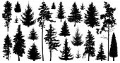 Silhouette Of Pine Trees. Set Of Forest Trees Isolated On White Background. Collection Coniferous Ev poster