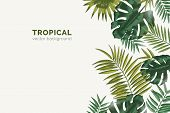 Summer Paradise Background With Exotic Palm Tree Branches And Tropical Monstera Leaves. Natural Hori poster
