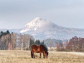 Brown Horse On Farm Pasture. Landscape With Brown Horse Grazing On Old Brown Pasture. Horse Eating I poster